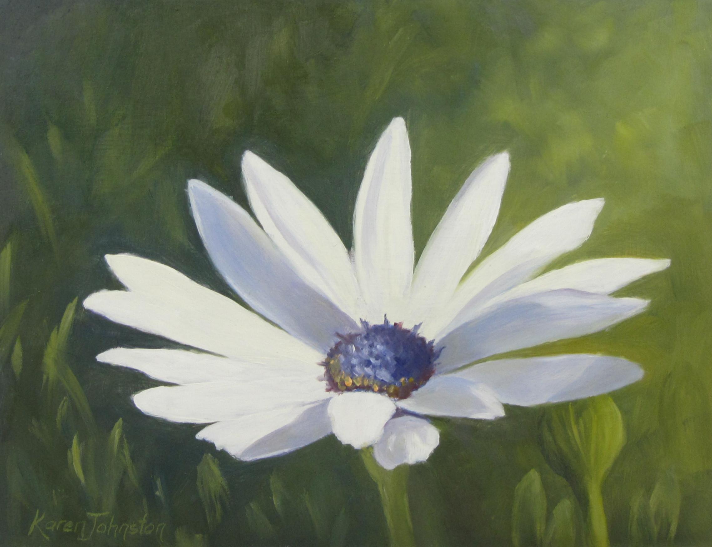 """Daisy"" original fine art by Karen Johnston"