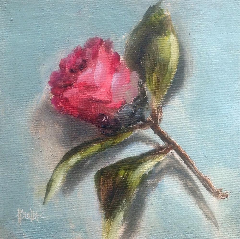 """Camellia bud #711"" original fine art by Heidi Shedlock"