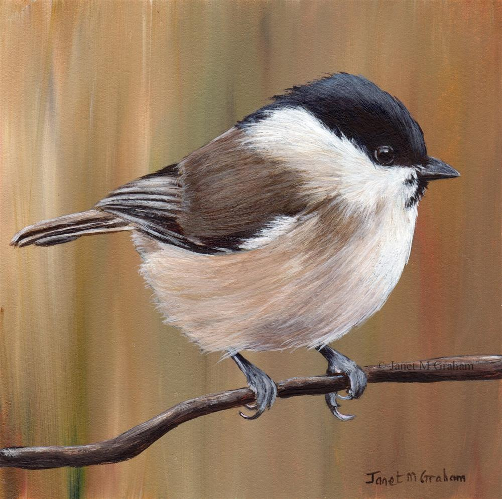 """Marsh Tit"" original fine art by Janet Graham"