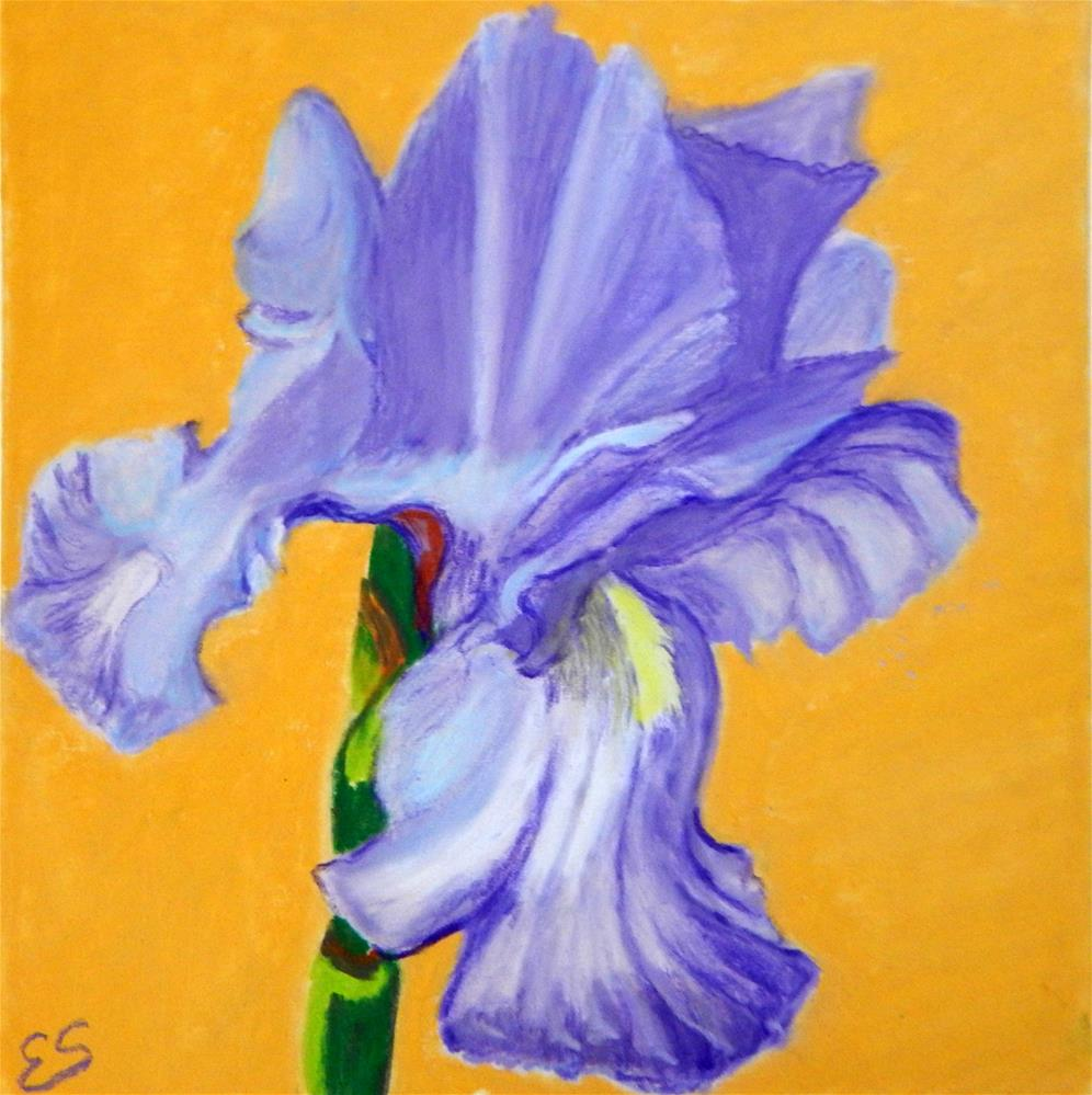 """Single Iris"" original fine art by Elaine Shortall"