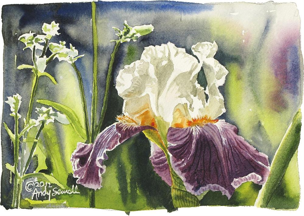 """Iris Glory"" original fine art by Andy Sewell"