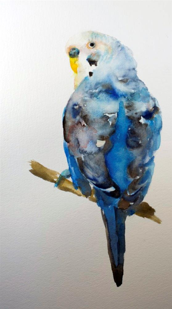 """Budgie Study #2"" original fine art by Sue Churchgrant"