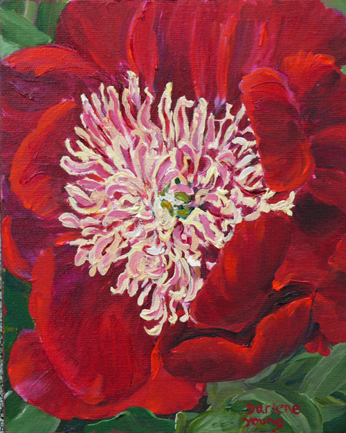 """Beacon Hill Park Peonies, acrylic, 8x10"" original fine art by Darlene Young"