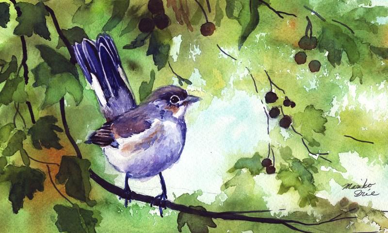 """Red-breasted Flycatcher"" original fine art by Mariko Irie"