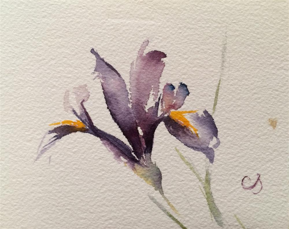 """Iris"" original fine art by Claudia Selene"