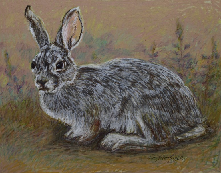 """Wild Rabbit"" original fine art by Sue Deutscher"