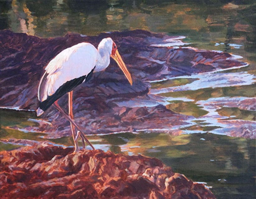 """Early Morning Fuel Stop - Yellow Billed Stork"" original fine art by Shawn Shea"