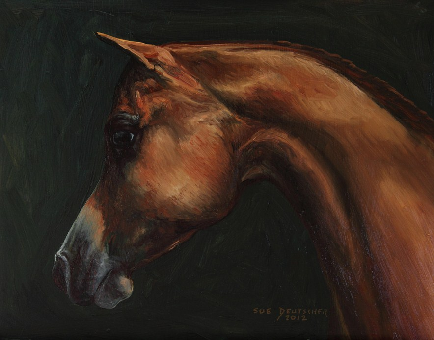 """Arabian Horse 120816"" original fine art by Sue Deutscher"