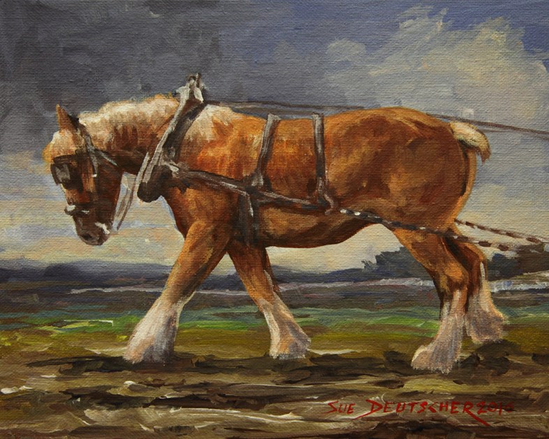 """""""Belgian Draft Horse"""" original fine art by Sue Deutscher"""