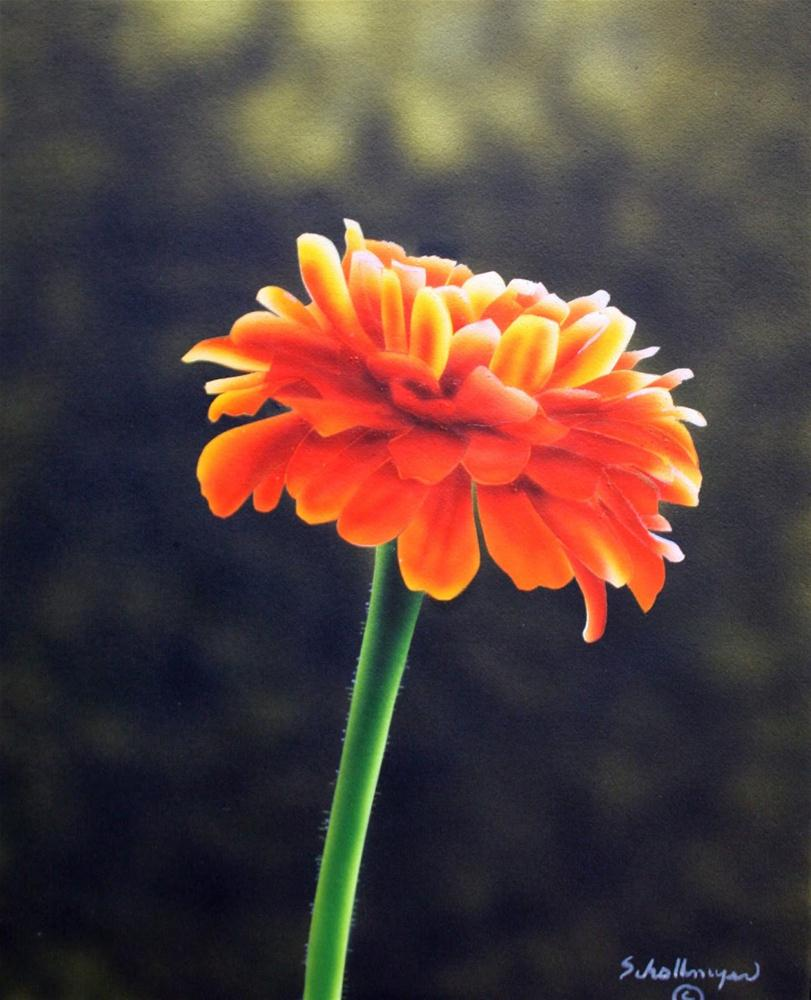 """Sunlit Zinnia"" original fine art by Fred Schollmeyer"