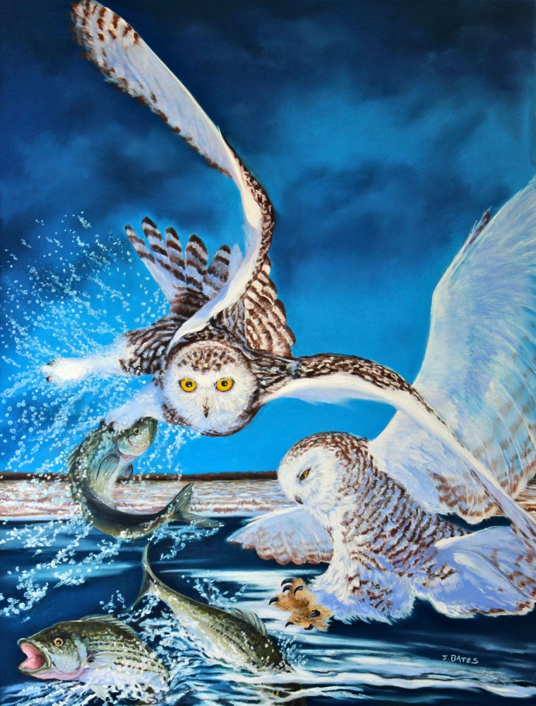 """Snowy Owl Strike"" original fine art by Jill Bates"