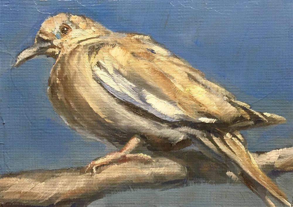 """White-winged Dove"" original fine art by Gary Bruton"