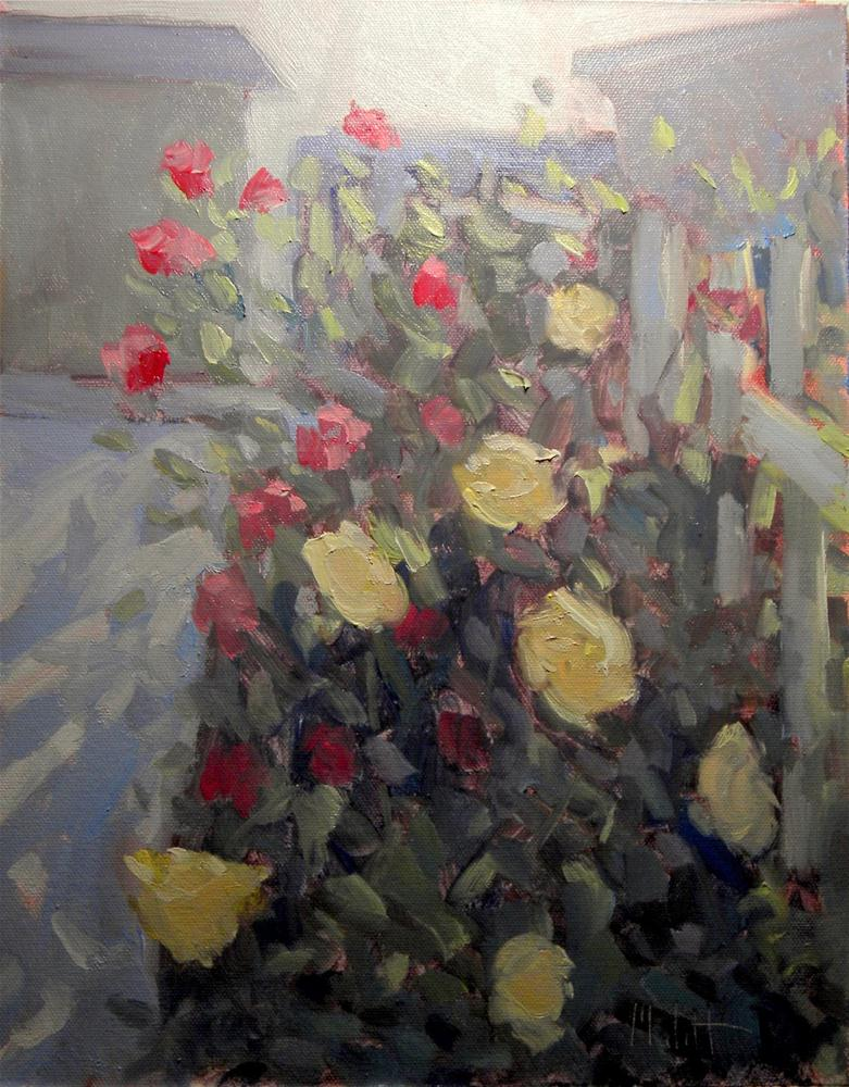 """Impressionism Art Roses in the Alley Morning Light Contemporary Oil Painting 11""""x14"""" original fine art by Heidi Malott"""