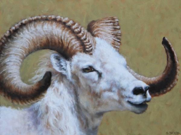 """""""Dall Sheep"""" original fine art by Sarah Becktel"""