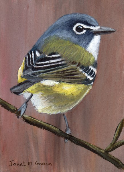 """Blue Headed Vireo ACEO"" original fine art by Janet Graham"