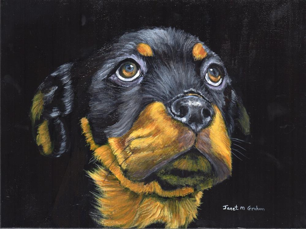 """""""Rottweiler Puppy"""" original fine art by Janet Graham"""