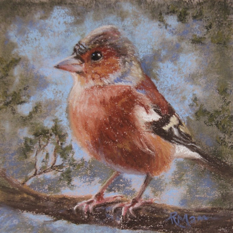 """Chaffinch"" original fine art by Ruth Mann"
