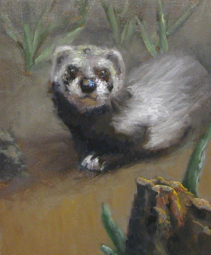 """friendly ferret"" original fine art by tom dawson"