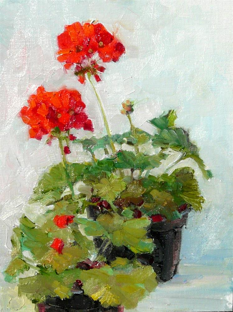 """Two Pots of Geraniums,still life,oil on linen panel,12x9,price$400"" original fine art by Joy Olney"