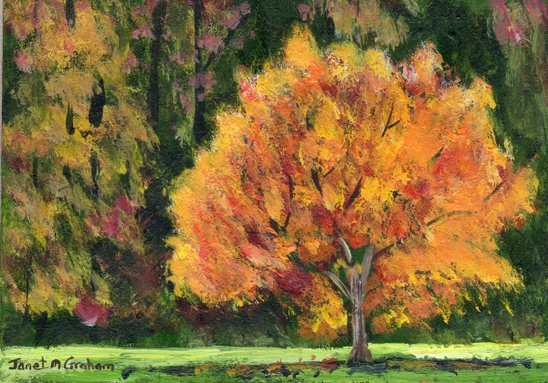 """Autumn Tree ACEO"" original fine art by Janet Graham"