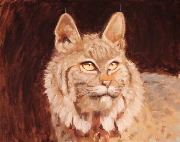 """Bobcat Study"" original fine art by Susan Matteson"