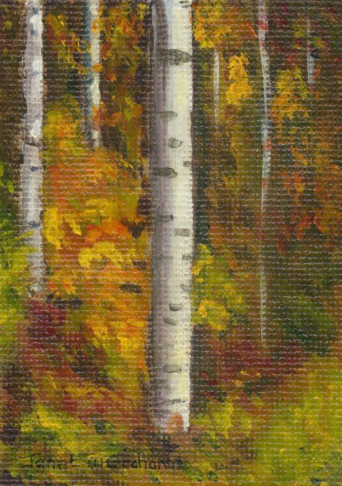 """Birch Trees 2"" original fine art by Janet Graham"