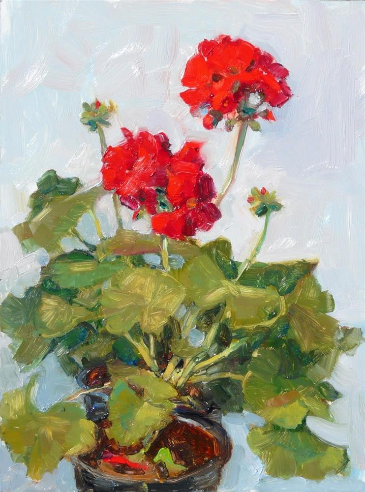 """Late March Geranium,Still life,oil on canvas,12x9,price$450"" original fine art by Joy Olney"