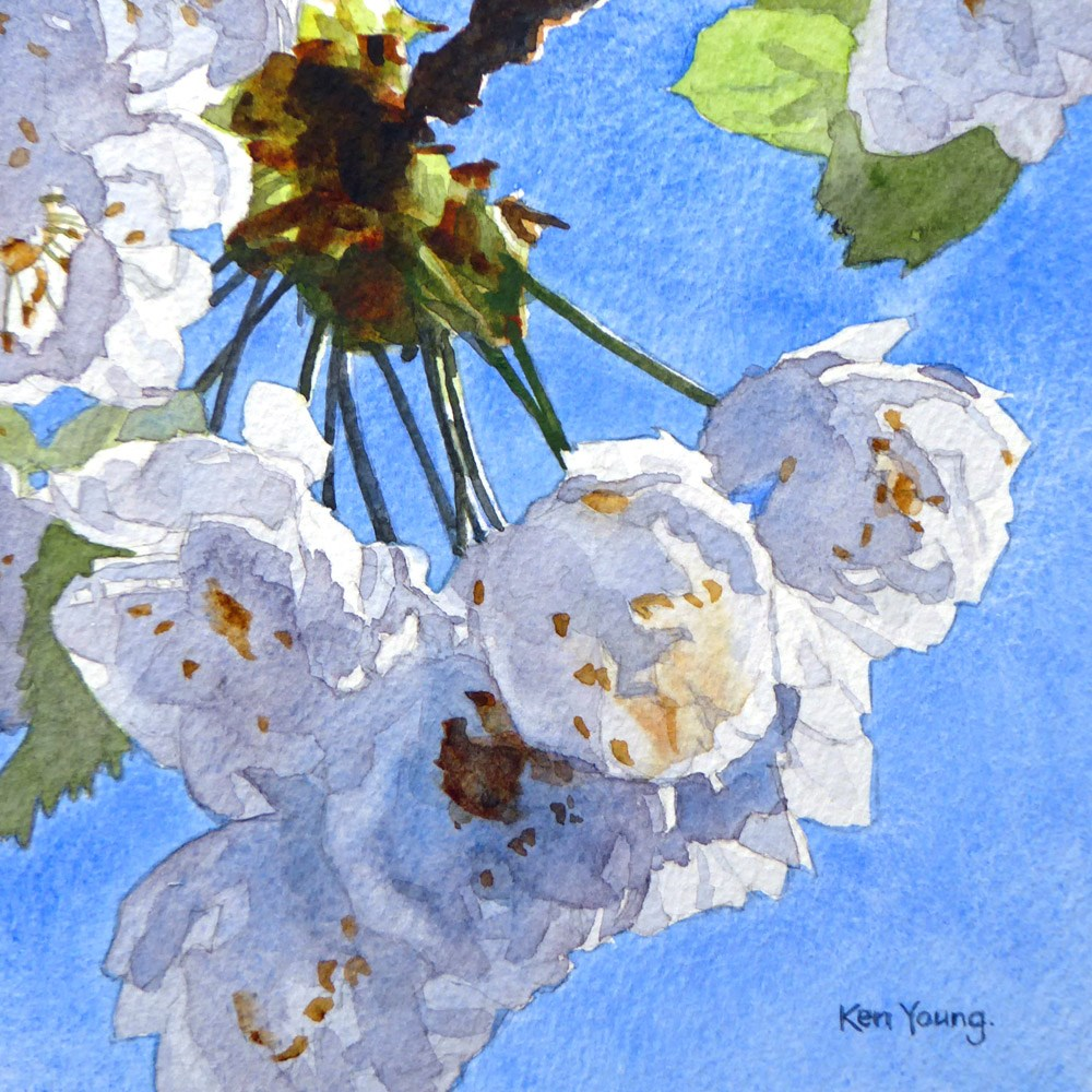 """White Blossom"" original fine art by Ken Young"