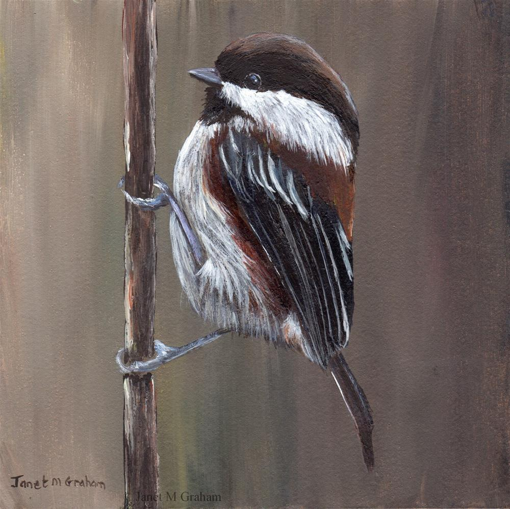 """Chestnut Backed Chickadee No 2"" original fine art by Janet Graham"