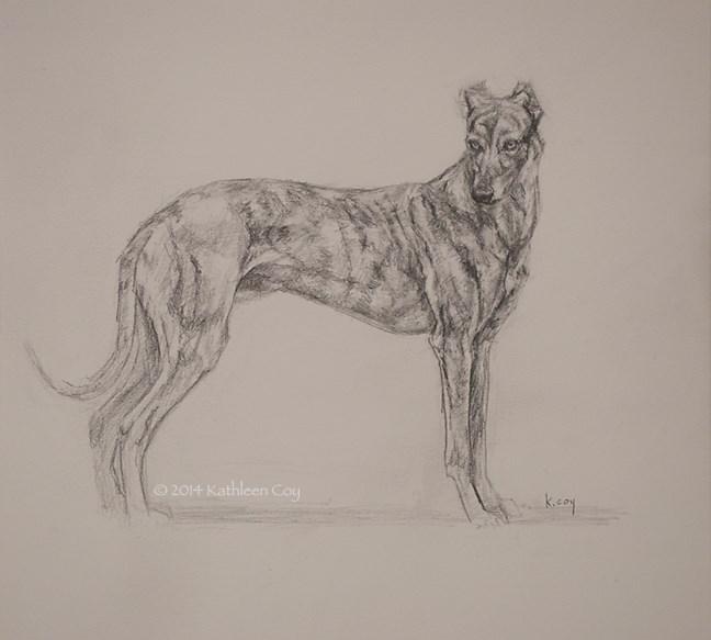 """""""44 - Greyhound"""" original fine art by Kathleen Coy"""