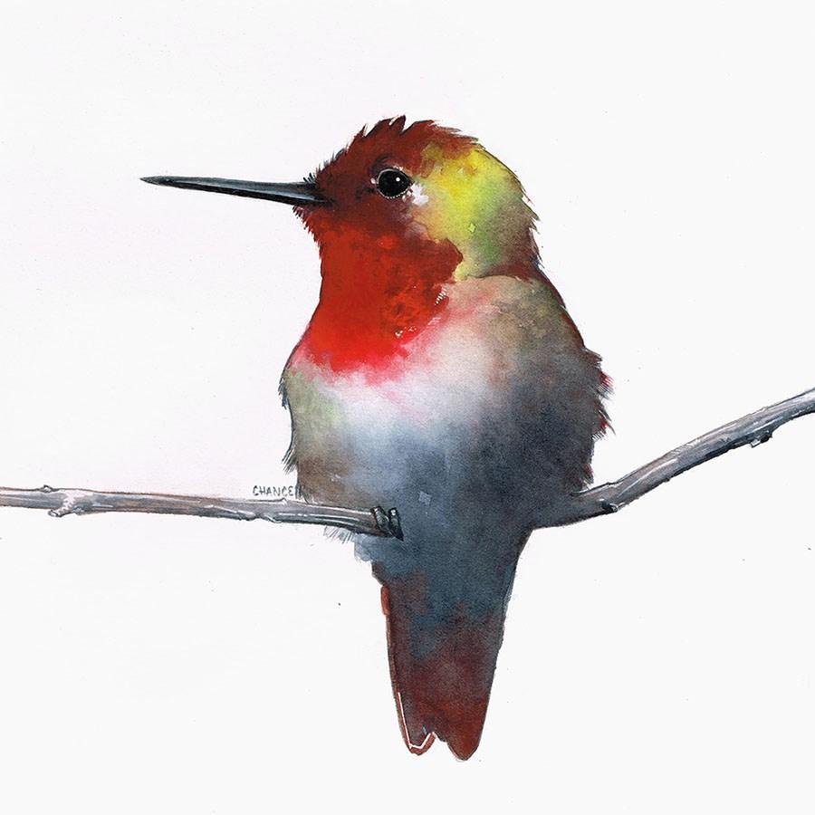 """Hummingbird"" original fine art by Annabel Chance"
