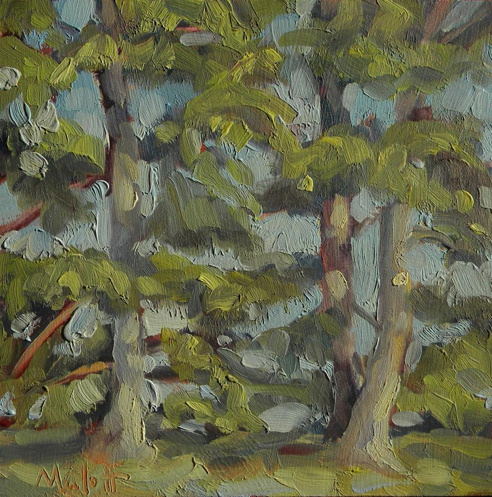 """Contemporary Tree Study Pine Boughs near St. Louis 2007 Archive Special"" original fine art by Heidi Malott"