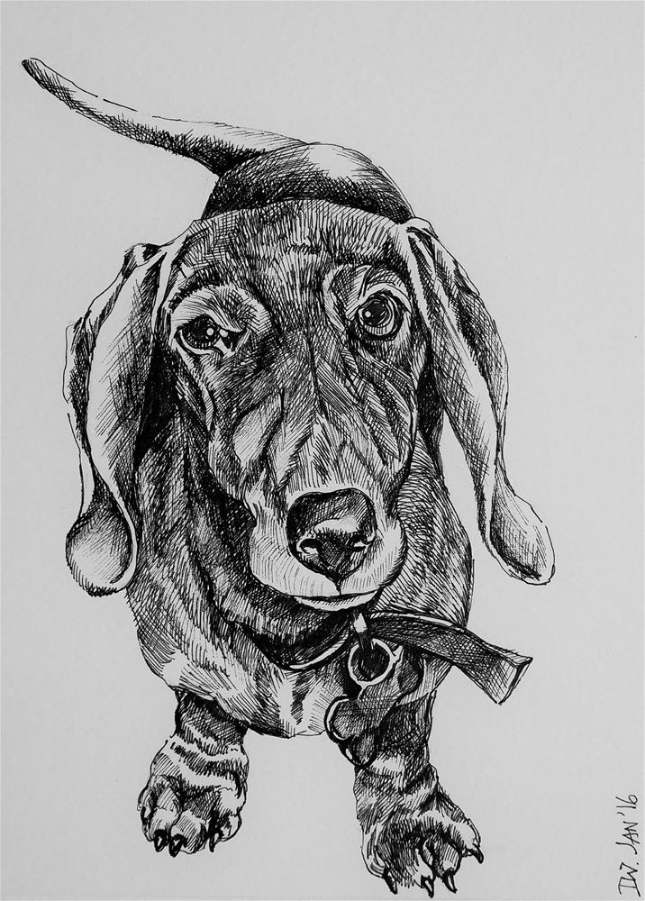 """Dog sketch 8  Dachshund"" original fine art by Daryl West"