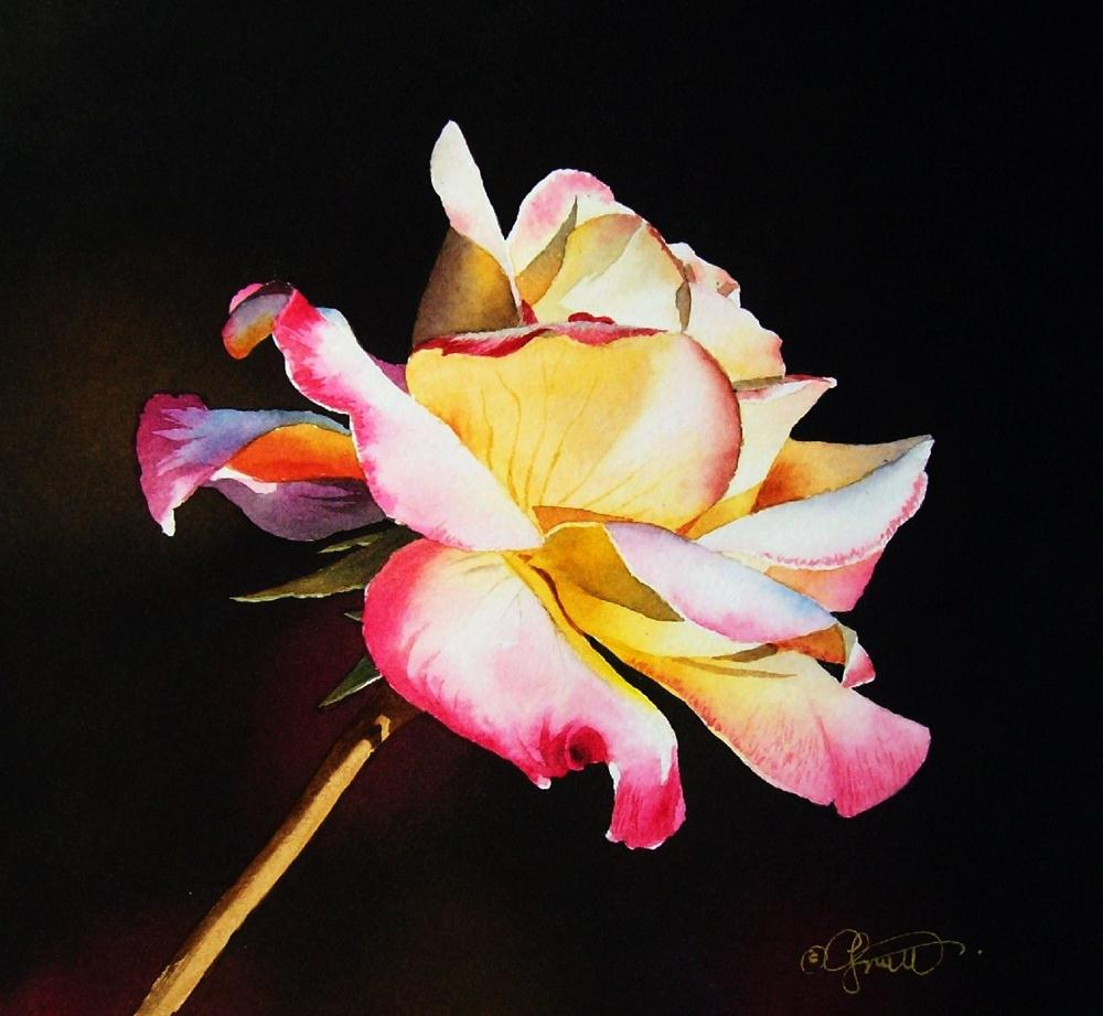 """Rainbow Rose 2"" original fine art by Jacqueline Gnott, whs"