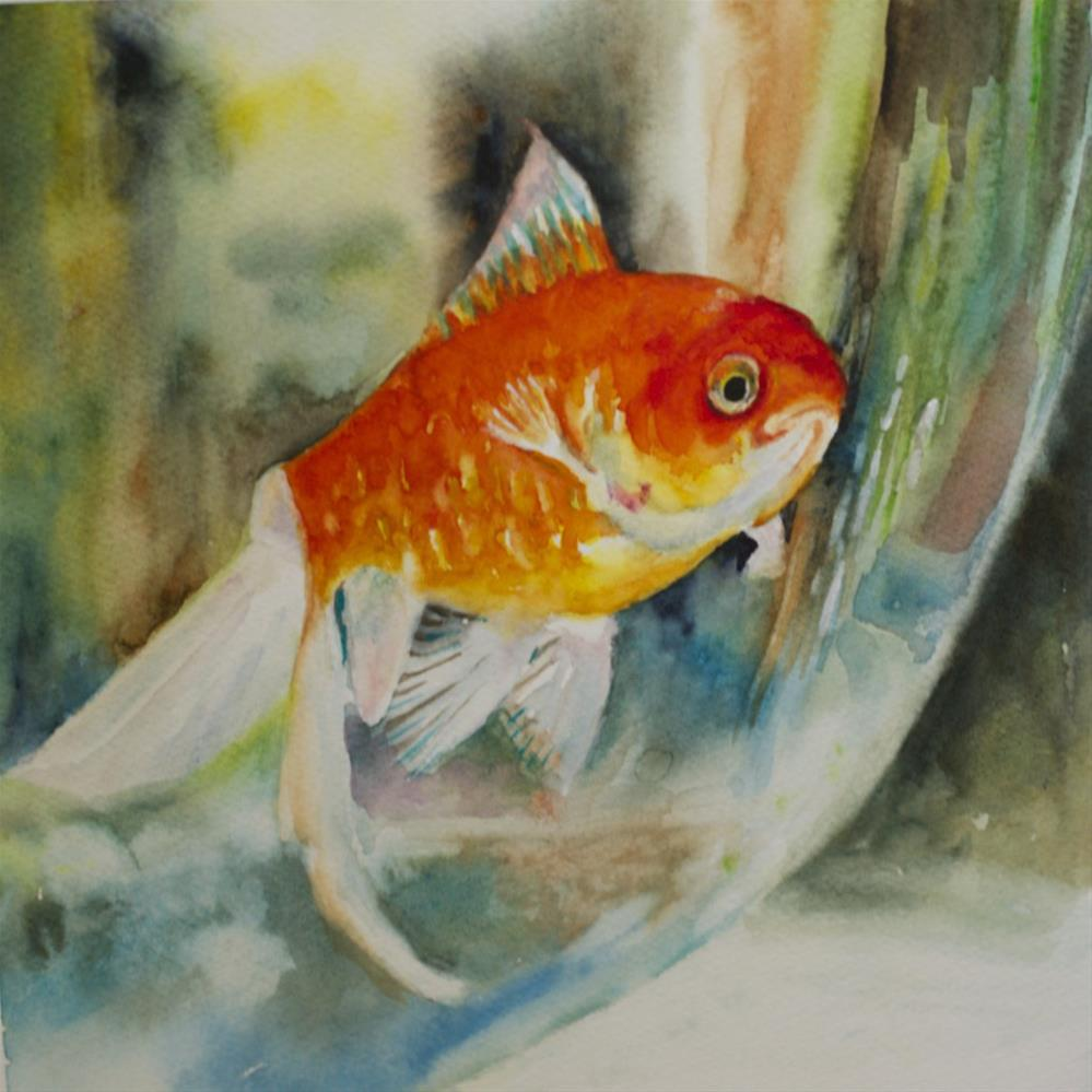 """Goldfish Study #4"" original fine art by Sue Churchgrant"