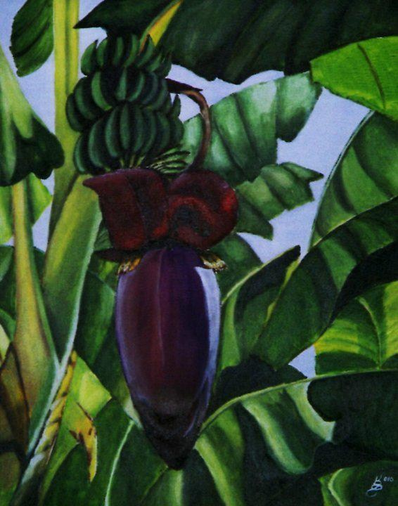 """Banana Blossom"" original fine art by Kim Selig"