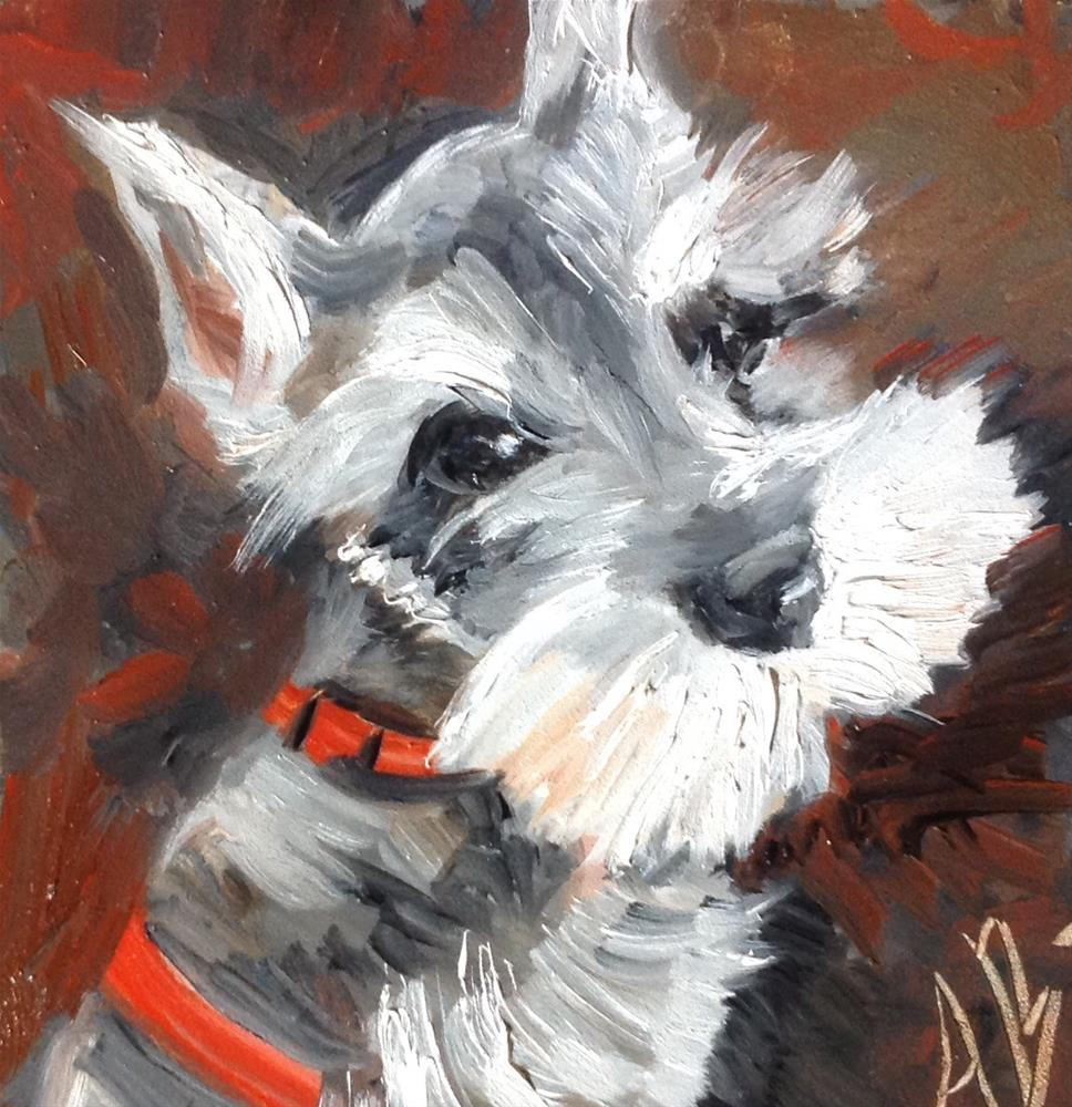 """Schnauzer pup"" original fine art by Annette Balesteri"
