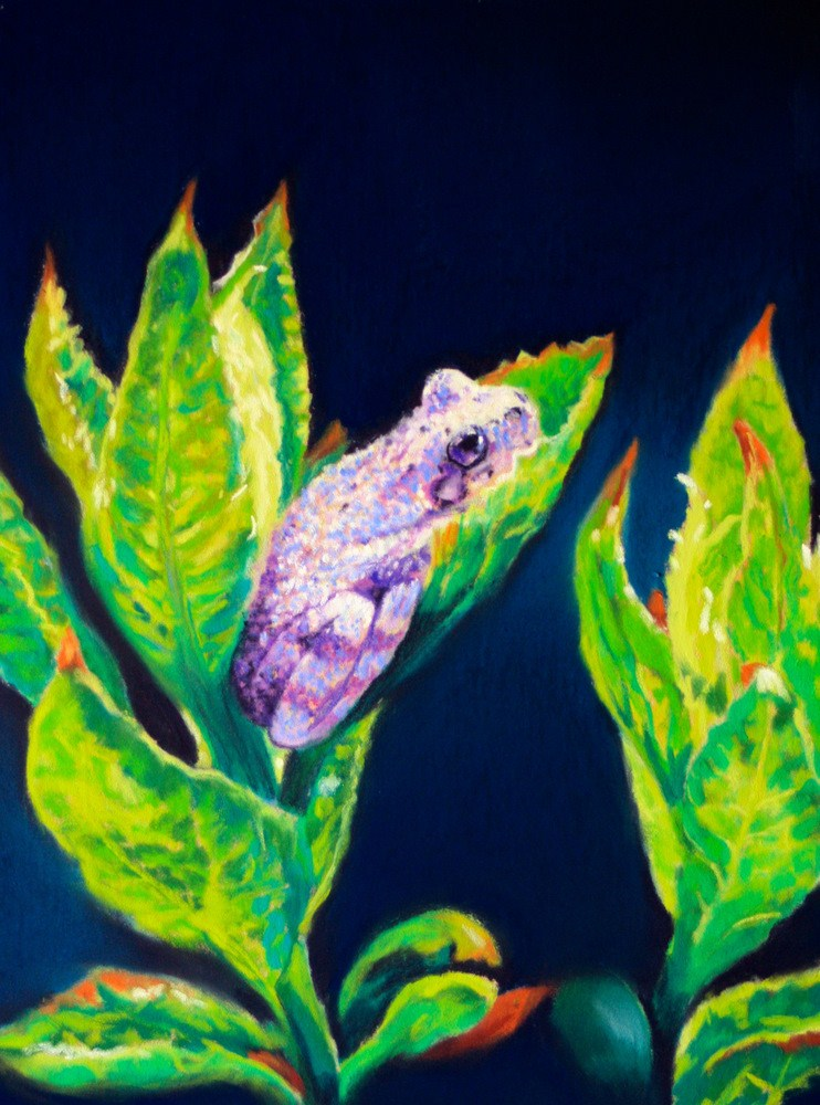 """Tree Frog in Hydrangea Leaves"" original fine art by Jill Bates"