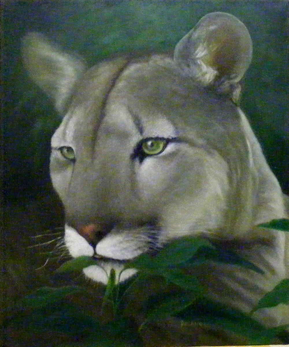 """Panther"" original fine art by Diana Delander"