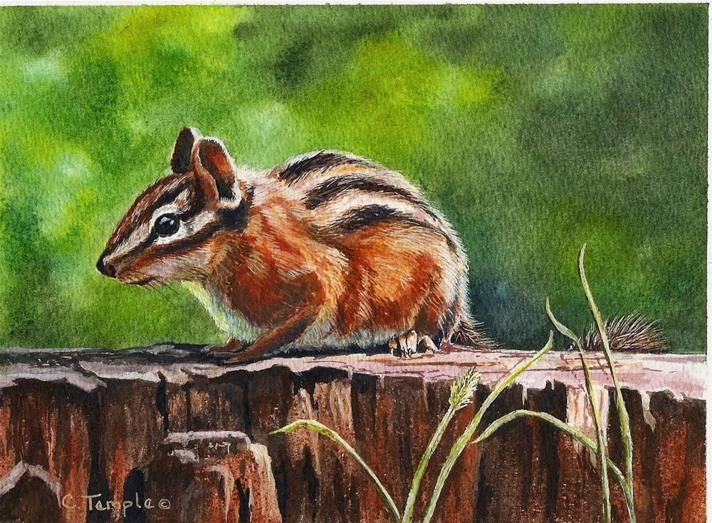 """Rocky Bluff Chipmunk"" original fine art by Catherine Temple"