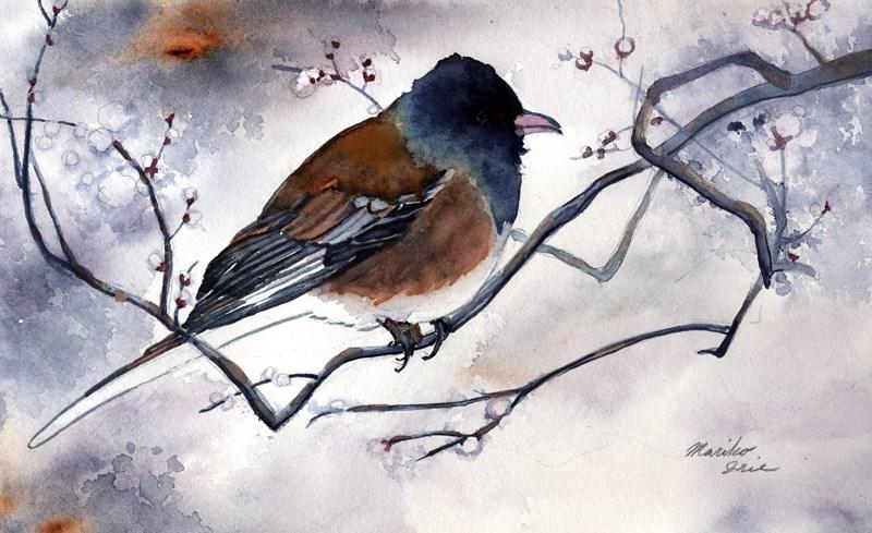 """Oregon Junco"" original fine art by Mariko Irie"