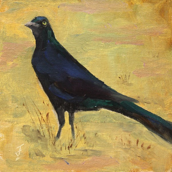 """Grackle Stare"" original fine art by Jane Frederick"