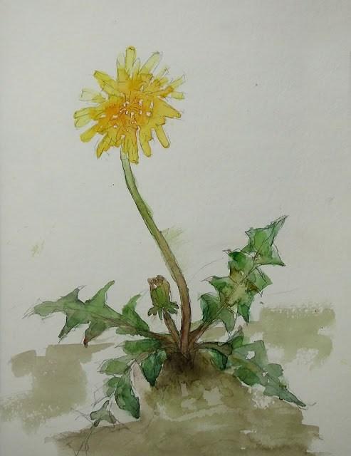 """""""Sketch 5"""" original fine art by Mitsuru Cope"""