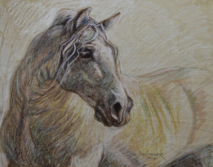 """Andalusian Horse"" original fine art by Sue Deutscher"