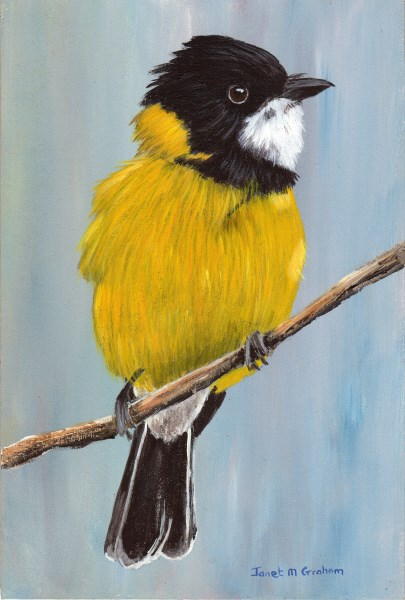 """""""Golden Whistler"""" original fine art by Janet Graham"""