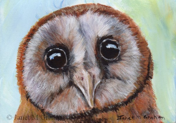 """Owl ACEO"" original fine art by Janet Graham"