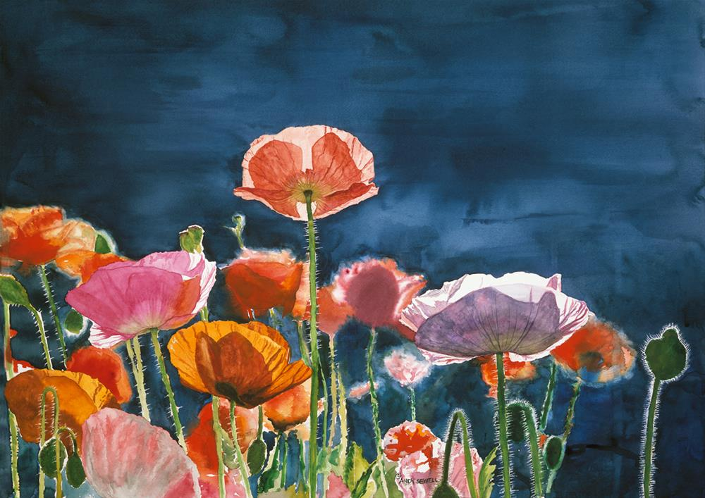 """Poppy Morning"" original fine art by Andy Sewell"