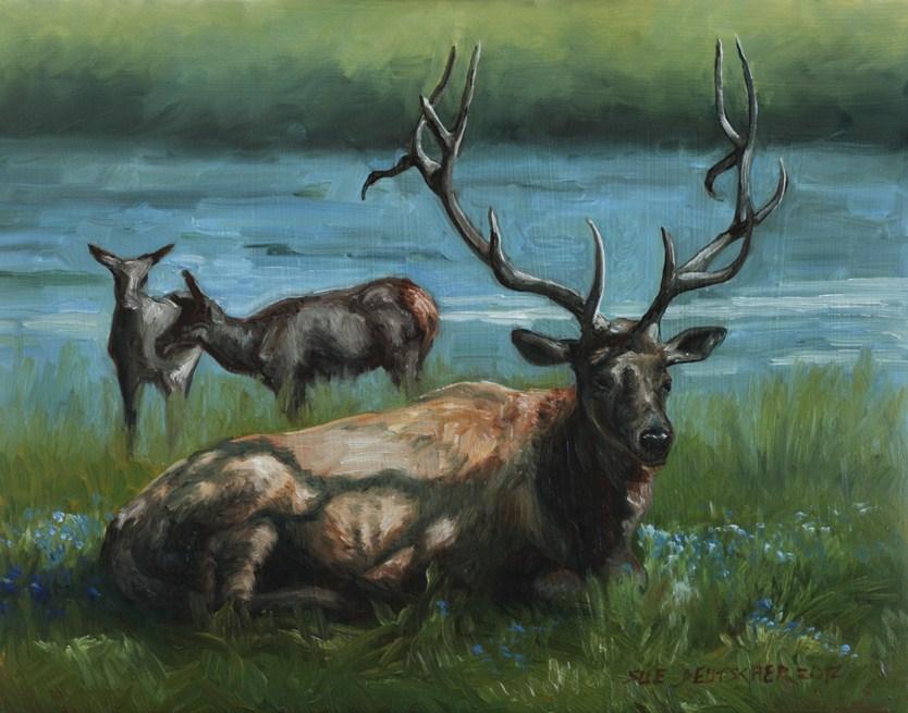 """Elk Gossip"" original fine art by Sue Deutscher"