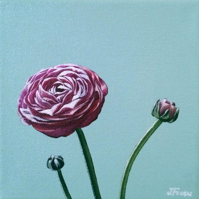 """""""Ranunculus Study"""" original fine art by Jelaine Faunce"""