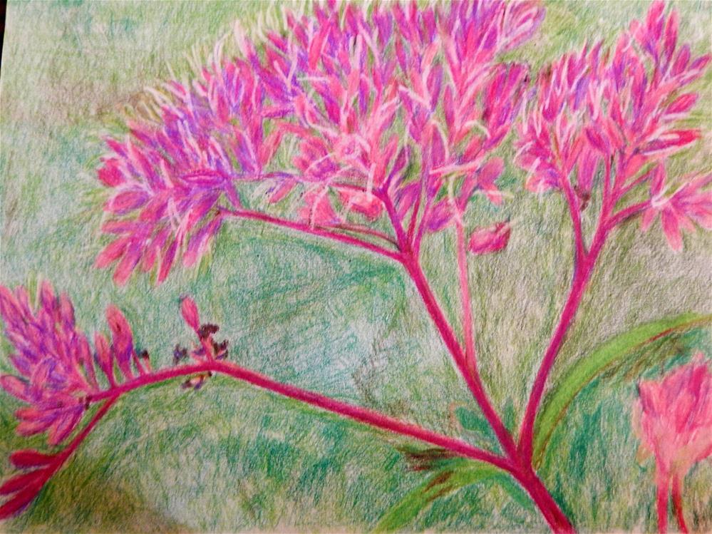 """Joe Pye Weed"" original fine art by Elaine Shortall"